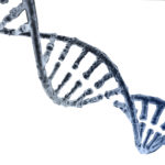 Spiral strand of DNA